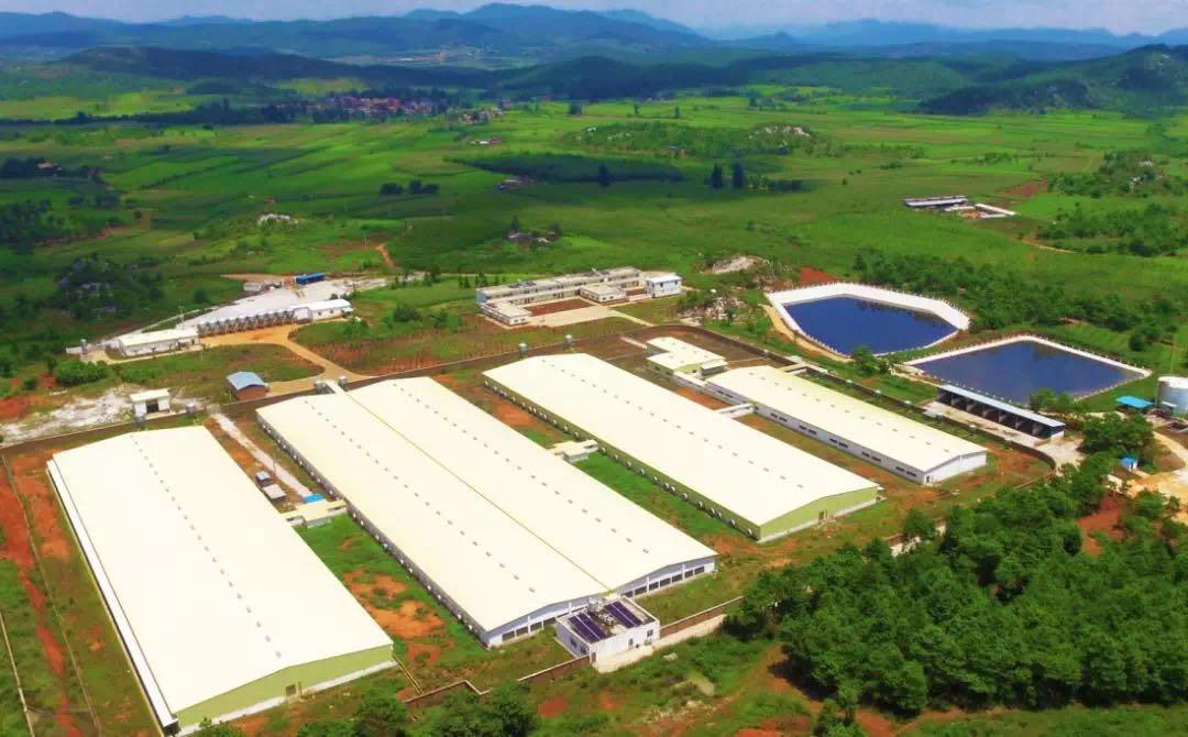 64个大型养猪项目落户辽宁,可新增生猪存栏200万头以上!