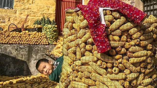 进口订单刚下,玉米价格却疯涨,一天涨180元/吨,闹哪样?