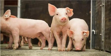 7月21日全国内三元生猪价格行情,猪价持续走低,南北涨跌差异化明显!