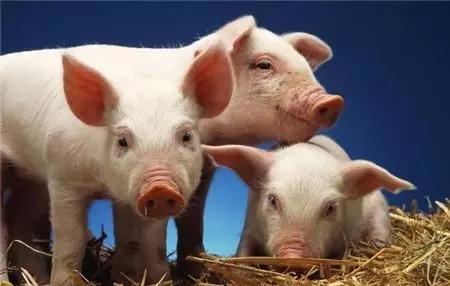 """贵州:独山县举行""""一村一场""""生猪产业化联合体签约仪式"""