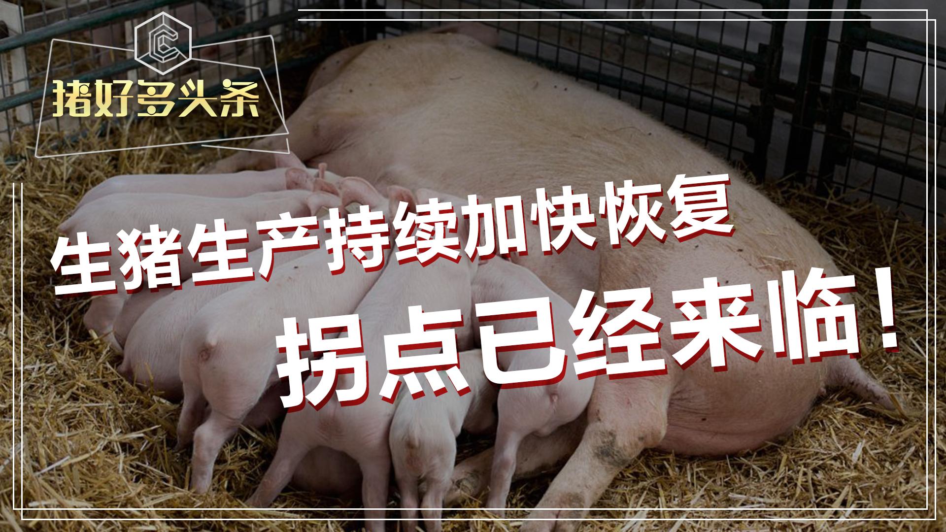 猪价拐点已至,主要表现在以下几个指标,这波行情是否还赶得上?