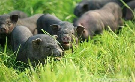 7月23日全国内三元生猪价格行情,北方一片跌势,南方还有这几个省市保持涨势!