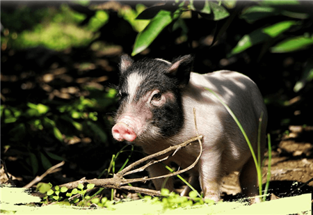 提高畜禽粪污资源化利用率 促进畜牧业绿色可持续发展