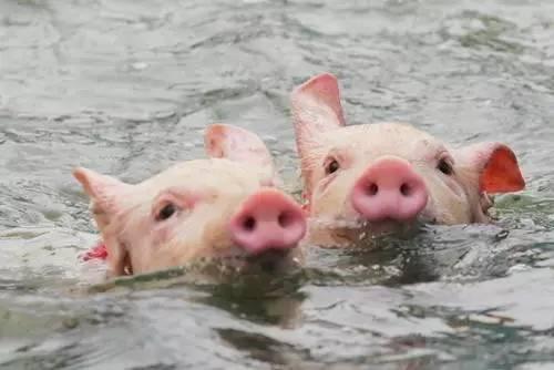 洪涝持续发生,水体如何有效防非?张桂红团队这项研究成果给出了答案