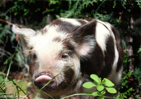 进口肉类安全么?超43家国外肉类企业被暂停进口