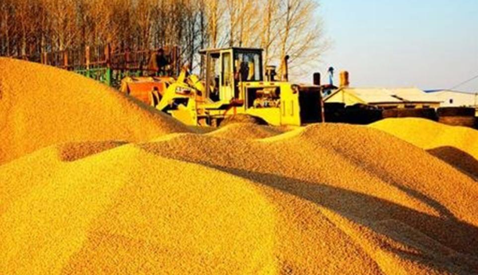 国内外玉米价差高达638元/吨,拍卖玉米去哪了?美趁机签下1577万吨订单