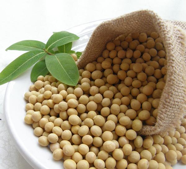 中美关系与协议持续执行,国内豆粕已过最差阶段?