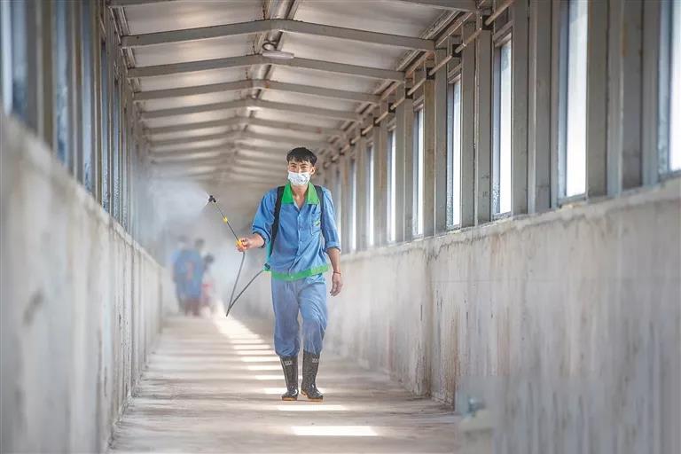 技术员对养猪场进行消毒