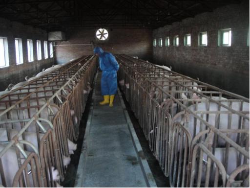 曹海涛老师拍了拍你:母猪群季节性保健方案汇总,拿走不谢