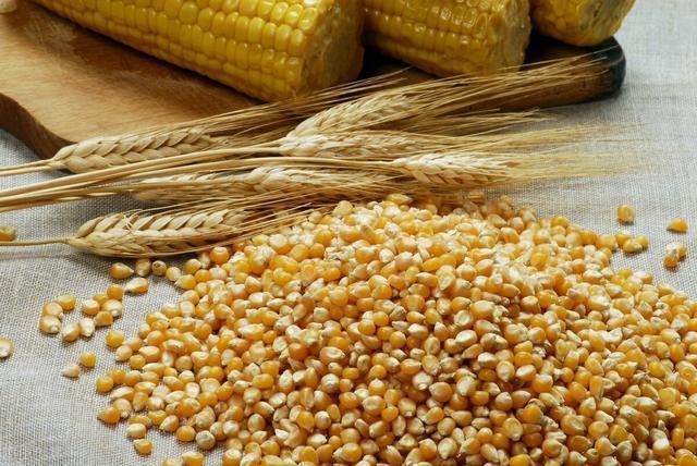 玉米行情全面上涨,直逼1.3元大关,粮补提升,但农民要警惕一事