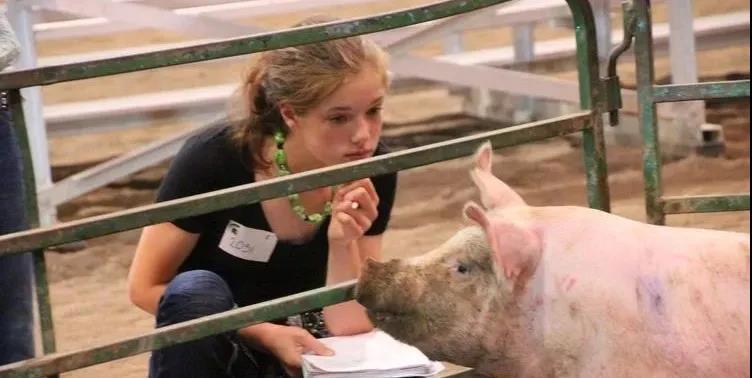 有关生猪发病风险与发病率的区别