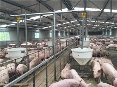 湖南:常德能繁母猪22.84万头,力争年底生猪存栏达到247万头
