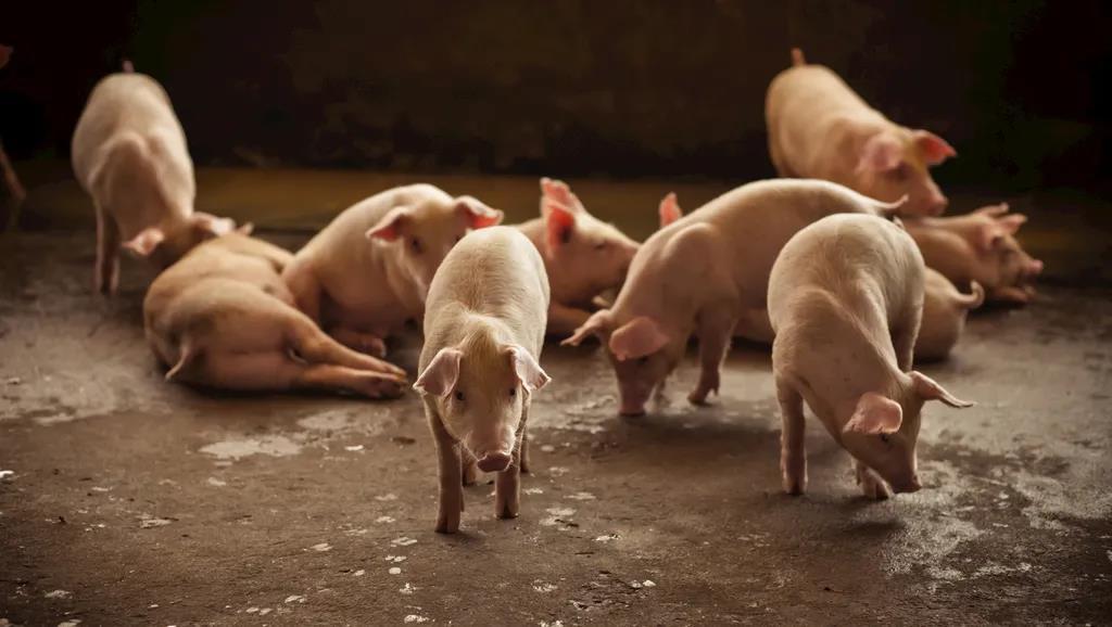 双疫情持续 进口肉安全吗?超43家国外肉类企业被暂停进口,猪肉进口市场未来如何走?