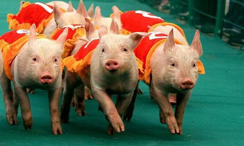 重庆生猪生产恢复超预期 超额完成生猪存栏任务