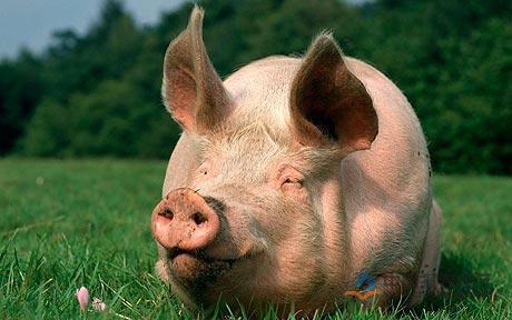 北大荒股份八五二农场 200万头生猪产业化项目开工