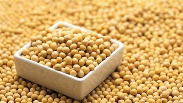 国产储备豆大量流拍 利空信号越来越明显
