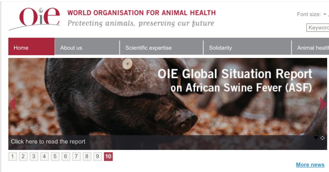 最新数据!世界动物卫生组织:非洲猪瘟致使亚洲6733791头猪死亡,占全球报告总损失的82%