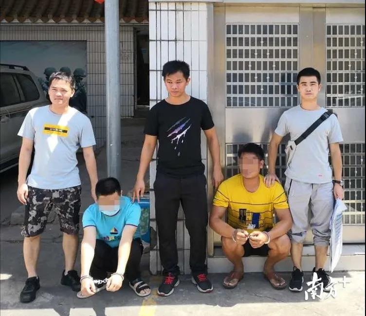 广东雷州一养猪场员工内外勾结,一夜盗窃20头猪!损失达10万元