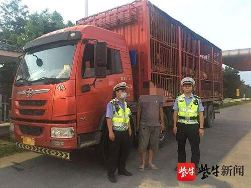 罚!无任何手续偷运价值30万元生猪,司机被罚15万!