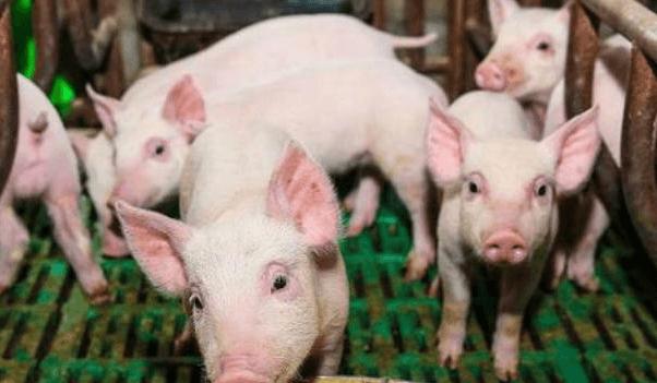 禁抗后断奶仔猪腹泻大幅上升,会成常态吗?该如何进行防控?