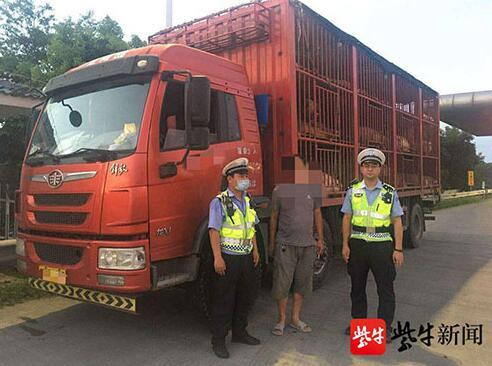 无任何运输手续,偷运价值30万元生猪被查