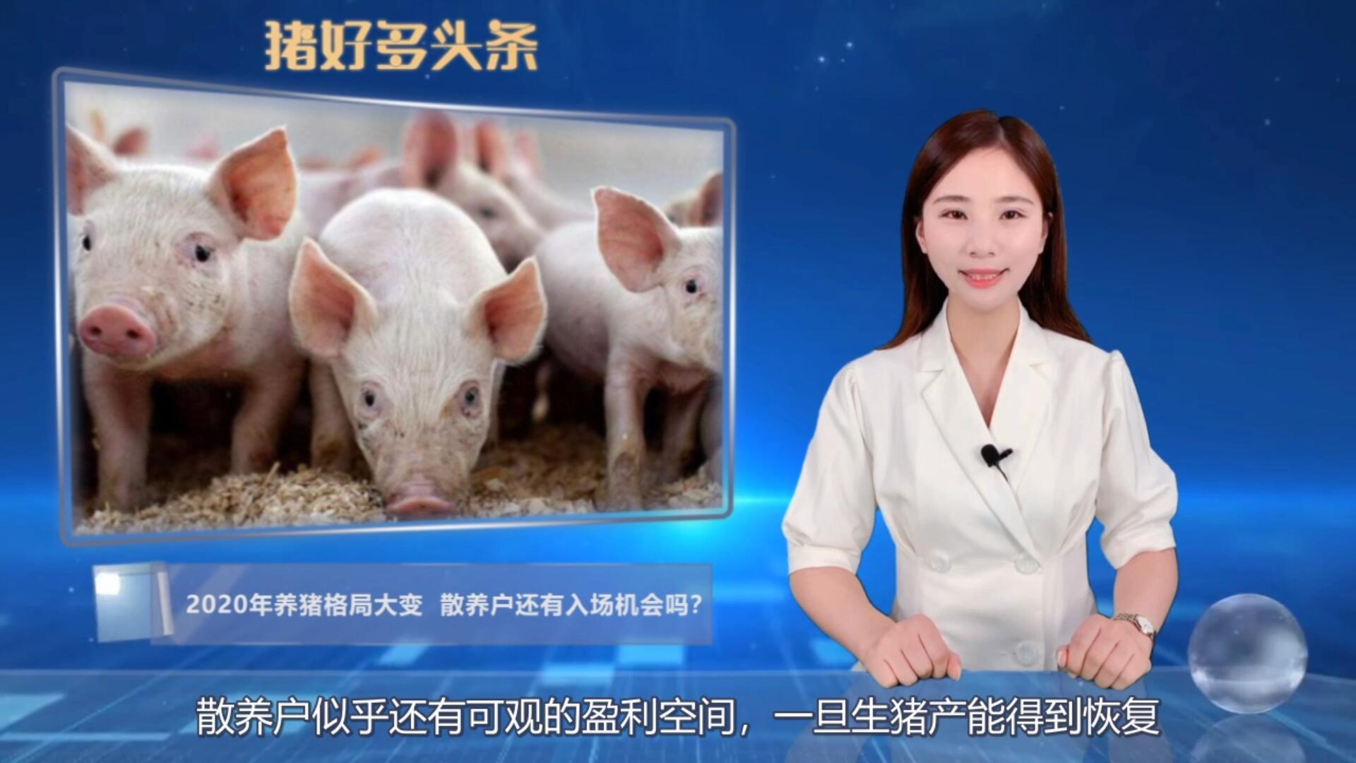 2020年养猪格局大变!规模猪场比例上升,散养户还有入场机会吗?