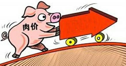 猪肉价格上涨了85.7%,问题究竟出在哪里?专家告诉你