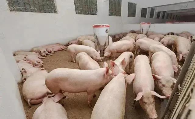 双汇发展上半年净利超30亿元 生猪屠宰量下降约六成