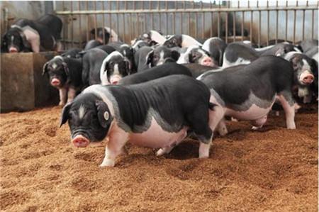 四川:达州市首届生猪产业协会成立