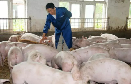 沿河研华村:出栏生猪781头收入38万元