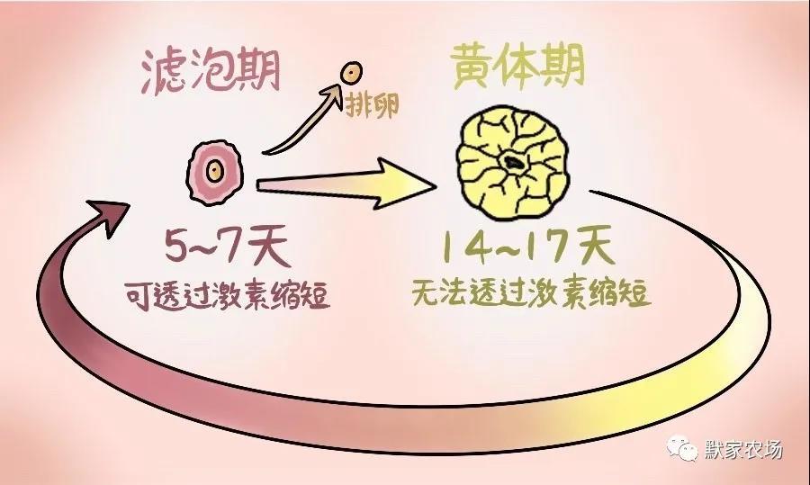 如何合理使用促性腺激素(上)——原理篇