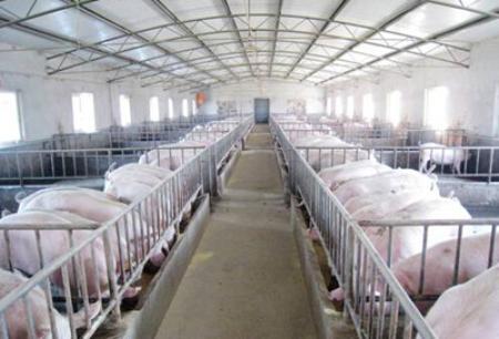 西安银行渭南分行支持生猪养殖产业发展带动脱贫攻坚