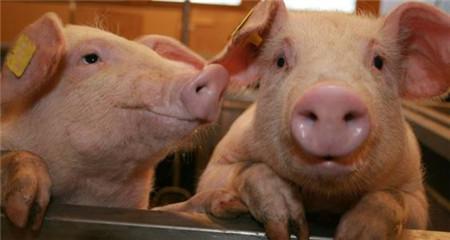 上个月猪价同比上涨85.7%,龙头猪企赚钱有多猛?