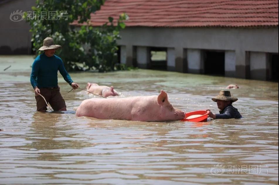 """这个养猪大省已面临""""水深""""考验30天!广西也发布暴雨预警···"""