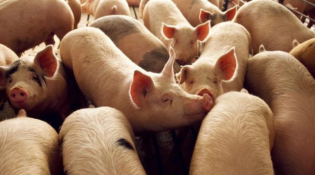 生物股份上半年营收净利双增长 动物疫苗行业前景广阔
