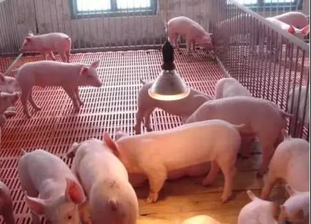 天兆猪业:以合作共赢为核心,走出养猪新模式