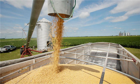 大豆出口需求异常强劲 供应日渐枯竭 巴西大豆价格已经飙升