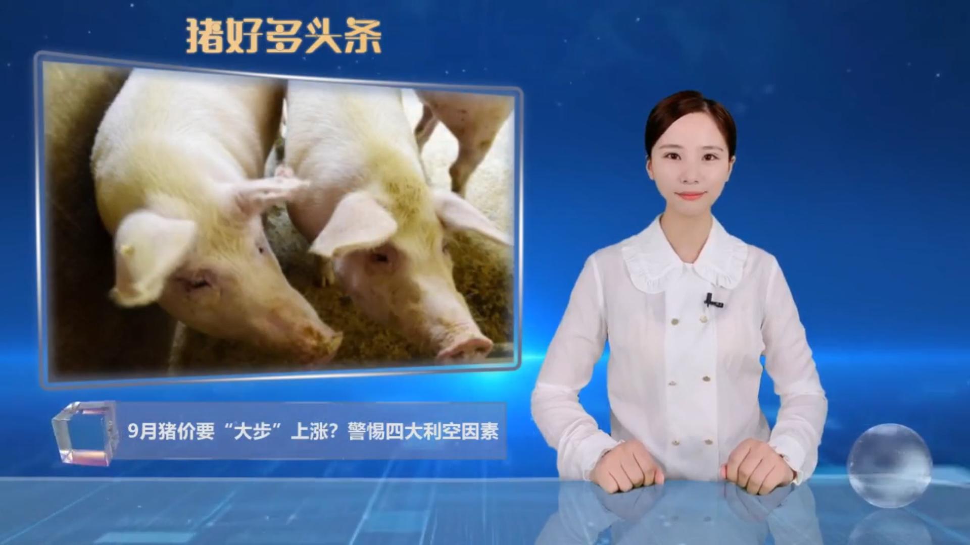 """猪价一片飘红,9月猪价要""""大步""""上涨?警惕4大利空因素"""
