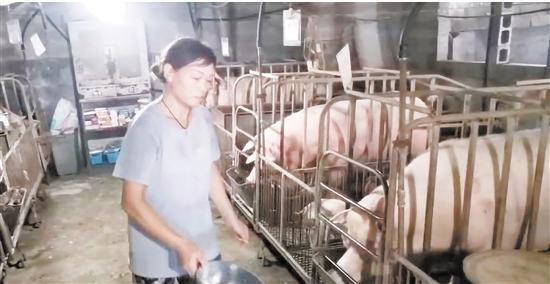 走向我们的小康生活·东阳百家幸——蔡敏芳:从欠债户到生猪养殖大户