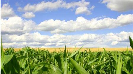 华北新玉米上市分析及后市展望预测 新粮上市前整体价格维持偏弱运行
