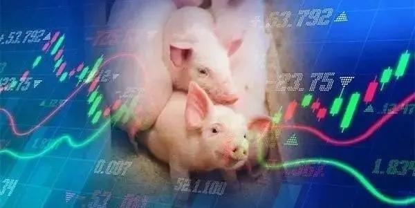 2020年下半年,生猪养殖前景如何?四个因素决定了未来的趋势