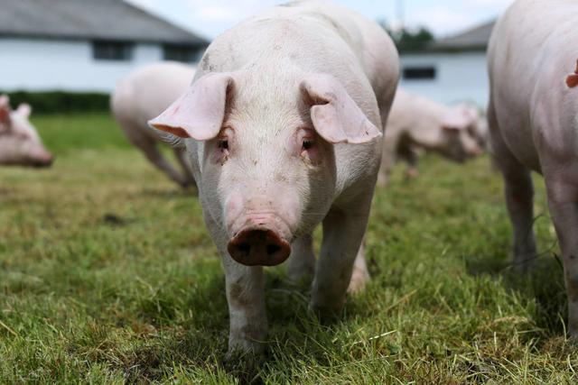 丹徒一养猪场开工建设 年出栏5万头商品猪