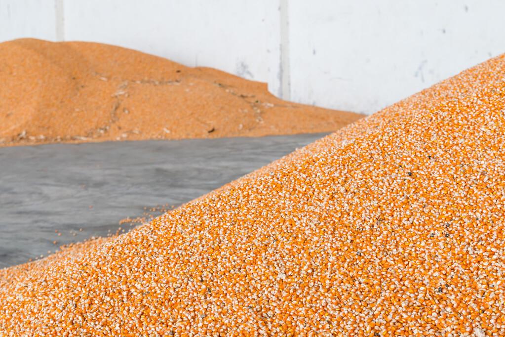 饲料涨价,冷冻肉进口,猪价震荡,到底是什么影响猪价呢?