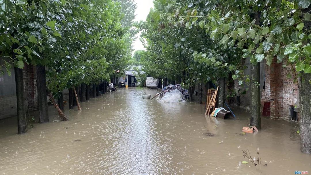 """台风来了要小心!多地猪场因暴雨出意外,养户被困、上百头仔猪被冲走,多家鸡场""""全军覆没"""""""