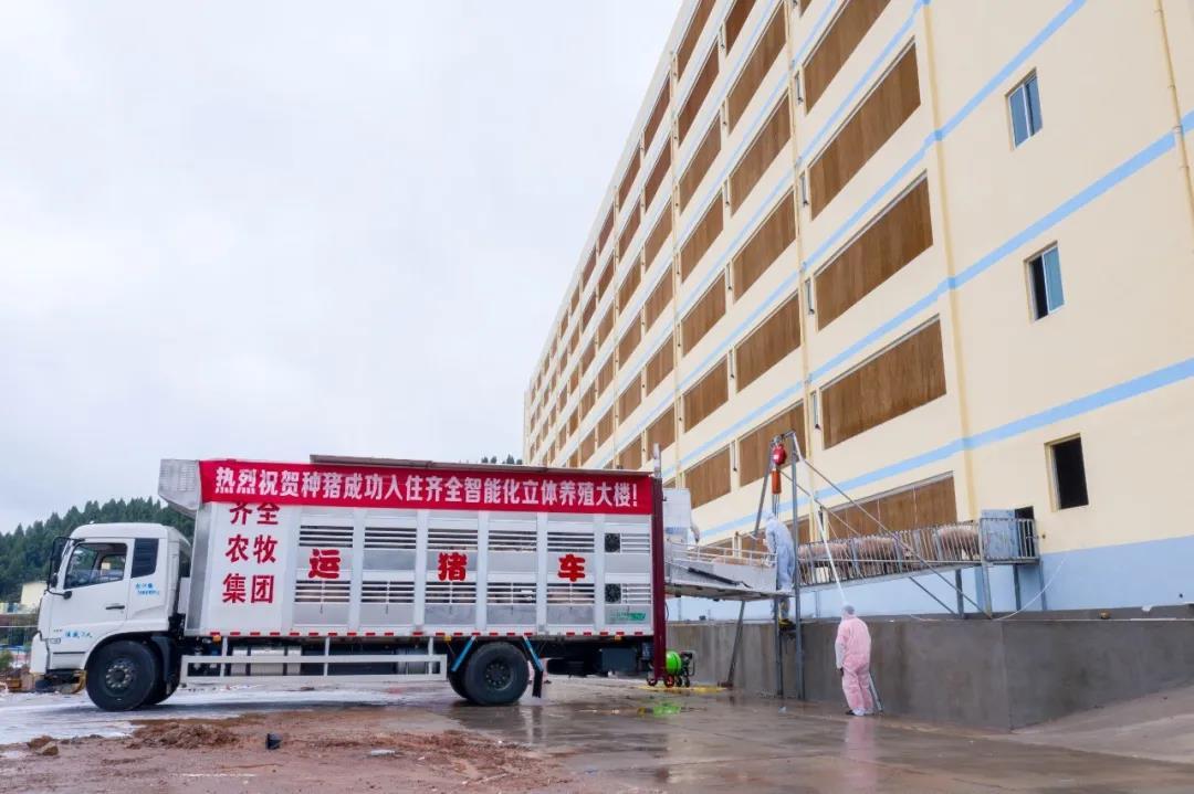 9层楼电梯公寓入住能繁母猪8000头!来看看四川首个规模化全生态立体养猪场
