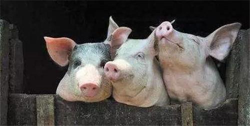 有理有据?北大屠夫预测:中秋后猪肉降至20,人人都能吃得起