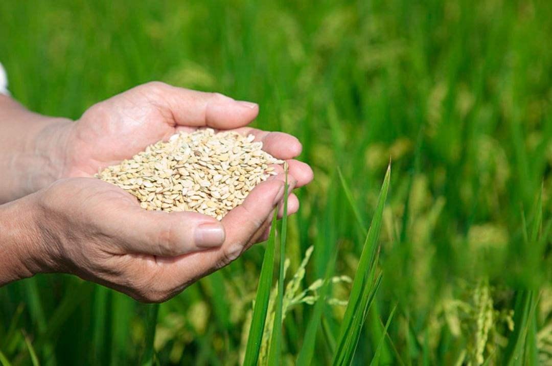 农业农村部:推进生猪生产恢复 下半年农业聚焦保供给
