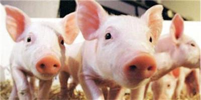 猪价17涨,养猪户笑了,压栏几天出栏更合理?猪贩子这样说