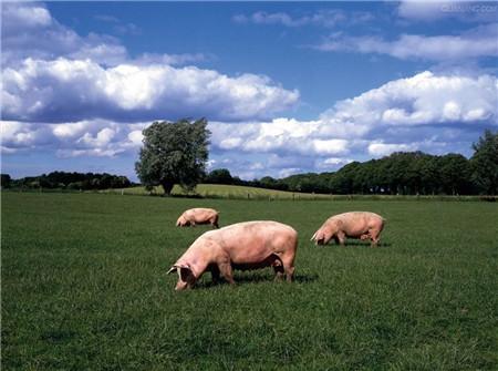 广西:防城港市生猪存栏超过往年平均水平