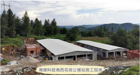 湘猪科技将成为湖南省内规模最大的商业化种公猪站运营公司
